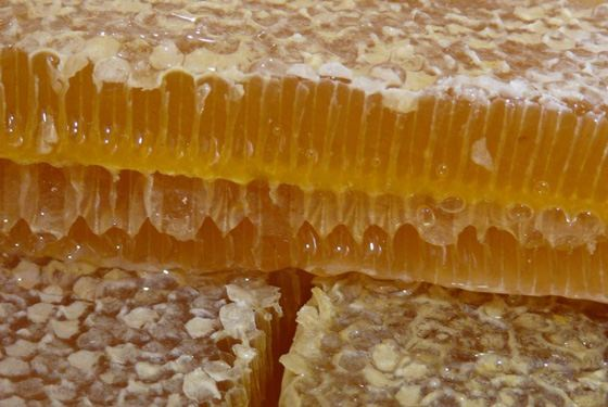 honey hranenie4