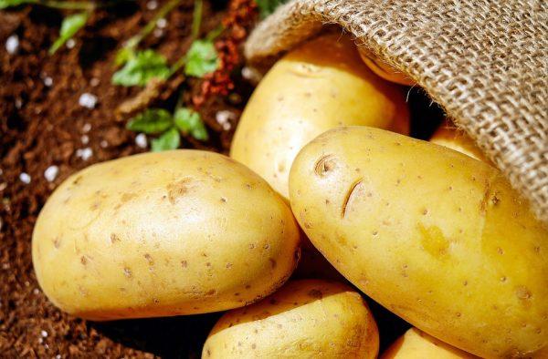 potato juice3