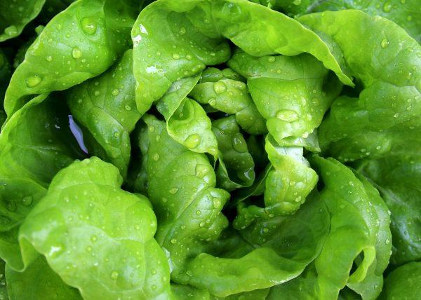 ranniy salat