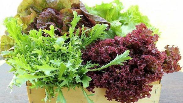 ranniy salat6