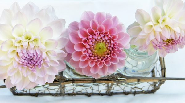 zveti v vaze23