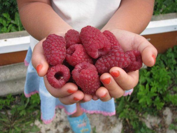 raspberry8