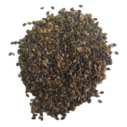 semena kljukvy