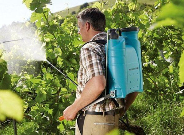 vinograd soda5