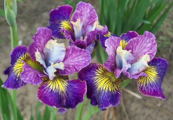 zveti obrezaty8