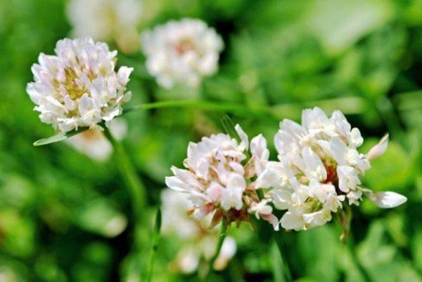 allergiya na zveti5