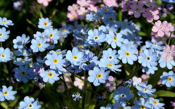 allergiya na zveti6