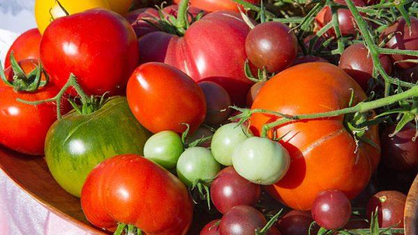 Что делать, если начали портиться помидоры? Лучшая подборка рецептов