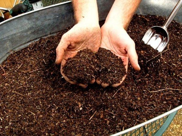 kak bistro sdelaty kompost2