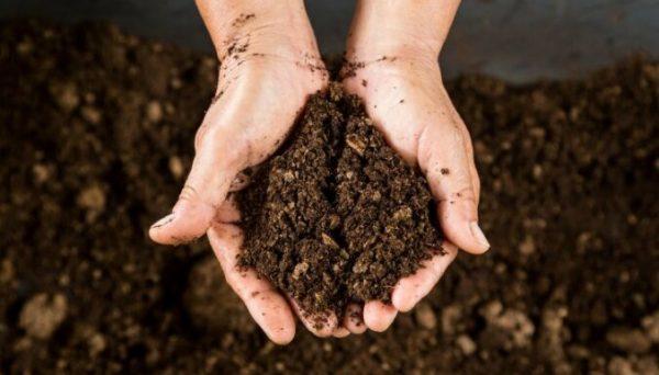 kompost zalozhity2