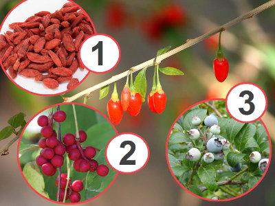 3 самых полезных ягоды в мире, которые каждый должен иметь в саду