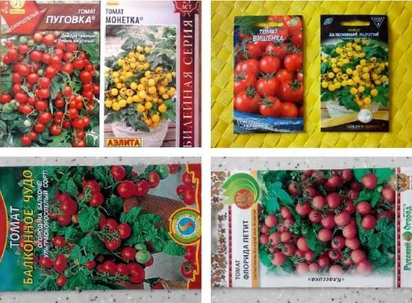 komnatnie tomati2