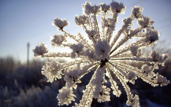 zveti v zimnem sadu
