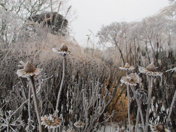 zveti v zimnem sadu3