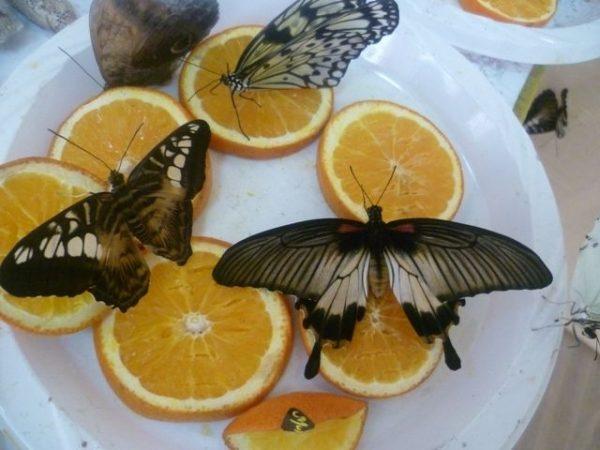 Apelsinovye korki kak udobrenie9