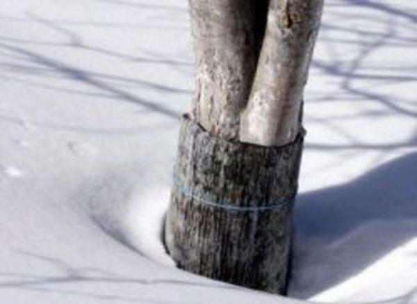 utaptivaty sneg2