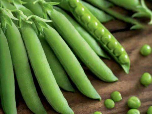 kogda sadity zeleniy goroshek2