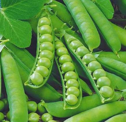 kogda sadity zeleniy goroshek4