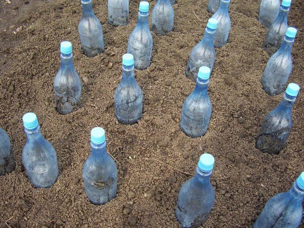 plastikovie butilki v ogorode2