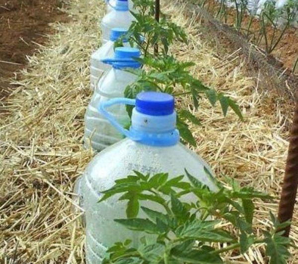 plastikovie butilki v ogorode3