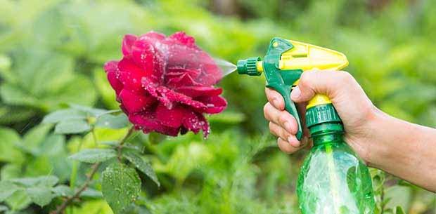 rozi v sadu5