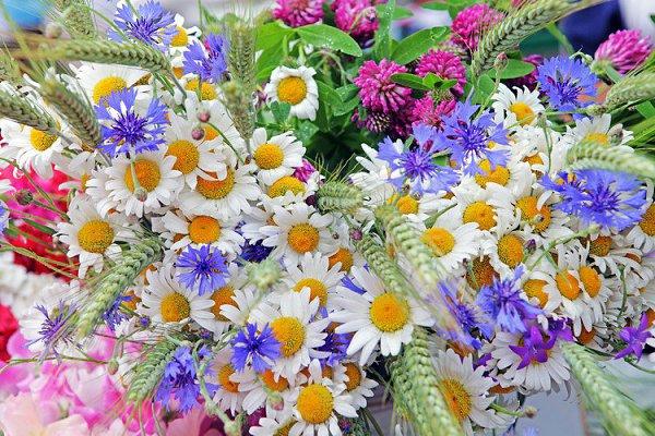 zveti v iyune