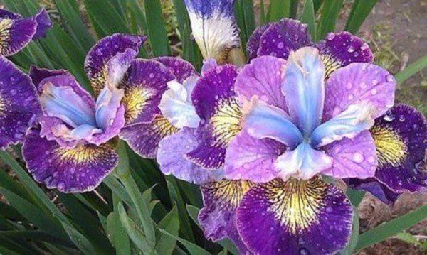 zveti v iyune2