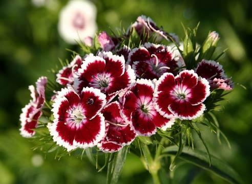 zveti v iyune5