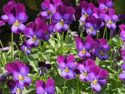 zveti v iyune8