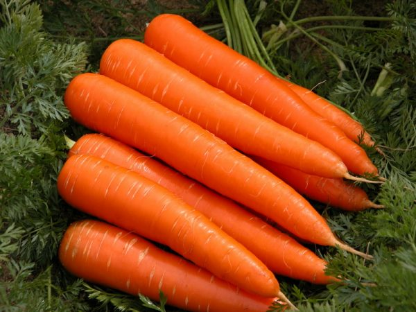 sladkie sorta morkovi