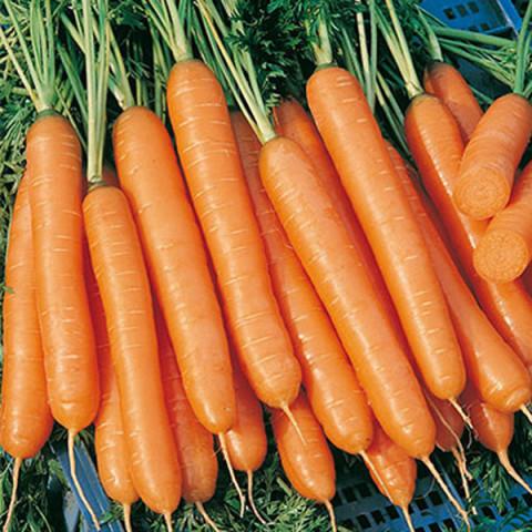 sladkie sorta morkovi4
