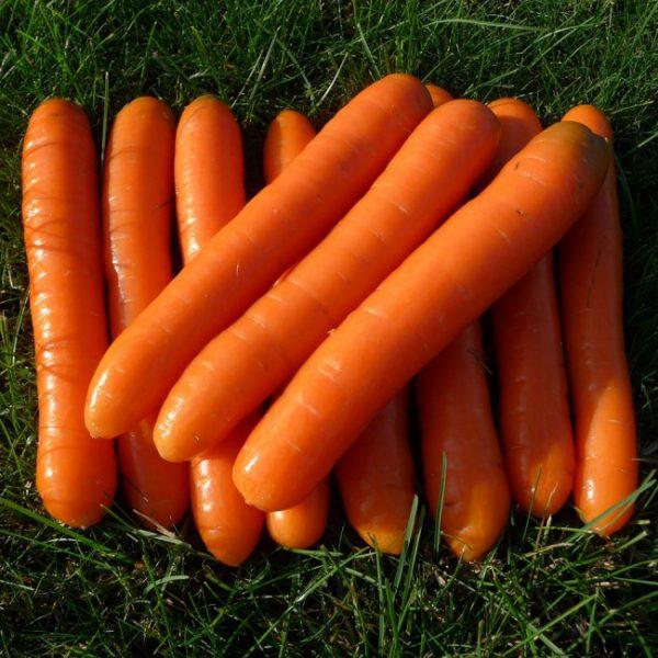 sladkie sorta morkovi6