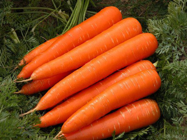 sladkie sorta morkovi7