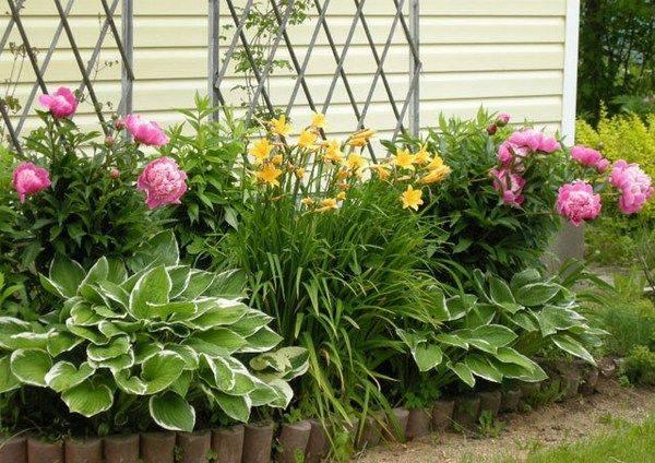zveti rastut v teni