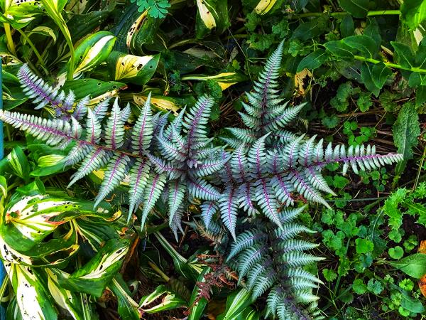 zveti rastut v teni3