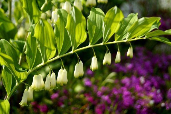 zveti rastut v teni4