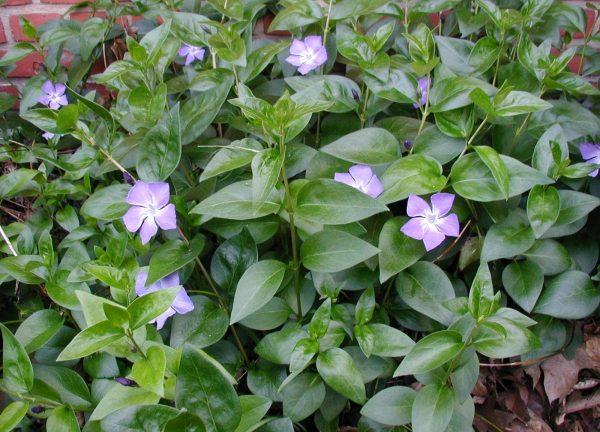 zveti rastut v teni5