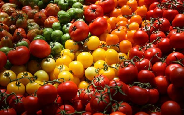 udobreniya dlya tomatov