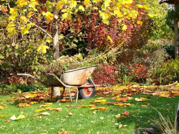 Этого вам сад не простит! Самые распространенные ошибки, что вы делаете осенью