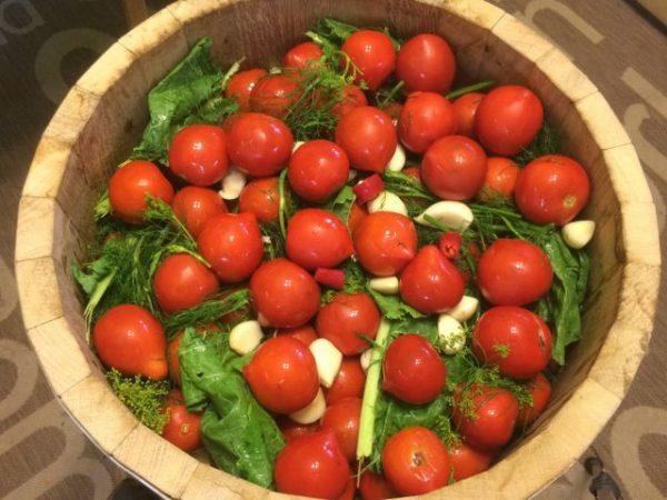 kak kvasity tomati5