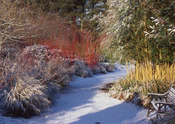 Деревья с красивой корой для изысканного зимнего сада