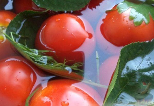 kvashennie pomidori